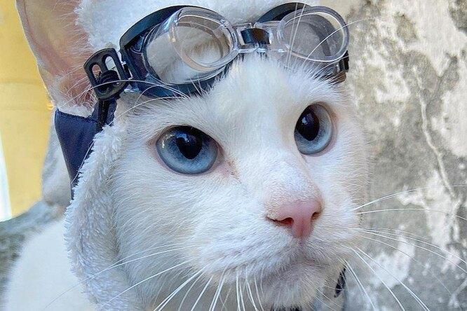 Слепой кот предсказал победителя первого матча Евро-2020