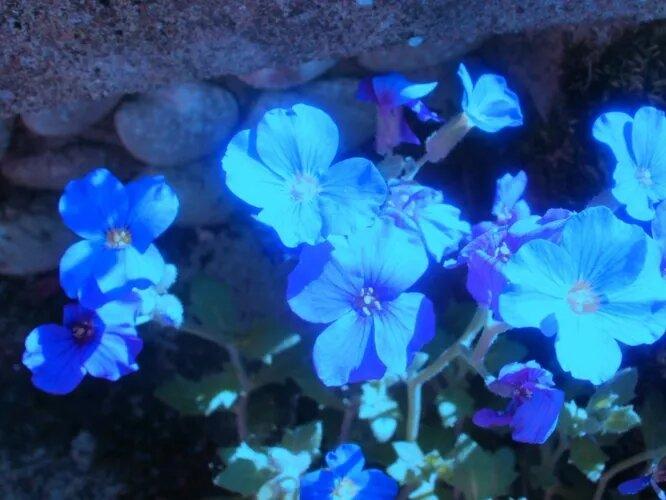 """Ультрафиолетовое зрение не только помогает ориентироваться в темноте, но и позволяет насекомым-опылителям распознавать некоторые цветы, требующие """"обработки"""". В ультрафиолете, например, неплохо видят пчёлы."""