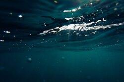 В научном мире начался «Год Тихого океана»