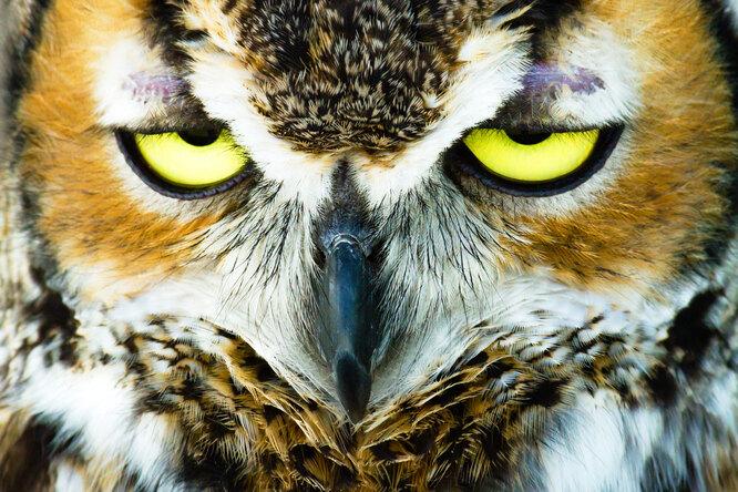 Как сохранить здоровье, если вы сова вмире жаворонков?