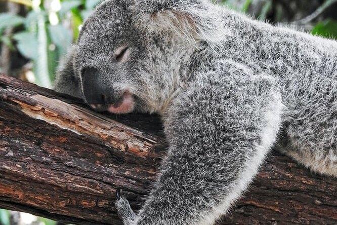 Сомнологи объяснили, как дневной сон влияет наорганизм