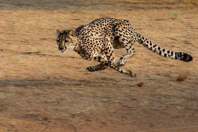 Самые быстрые животные вмире