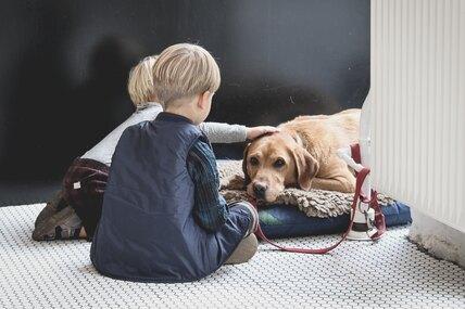 Собаки рождаются дружелюбными кчеловеку, а нестановятся ими