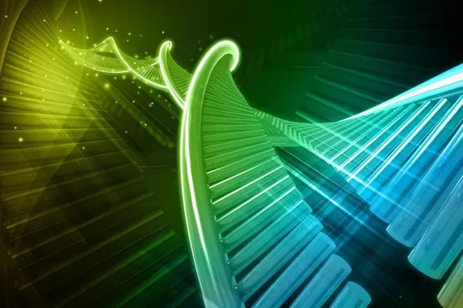 Как ученые вывели наполовину синтетический организм с«лишней» парой оснований вДНК