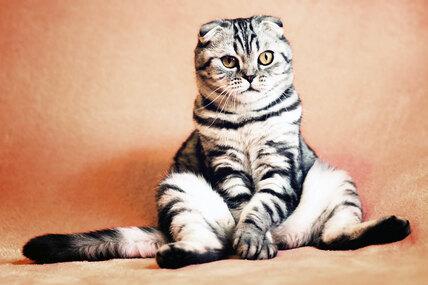 7 популярных кошачьих «странностей» сточки зрения науки