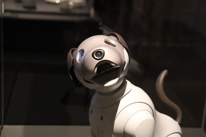 Роботы смогут заменить собак-поводырей