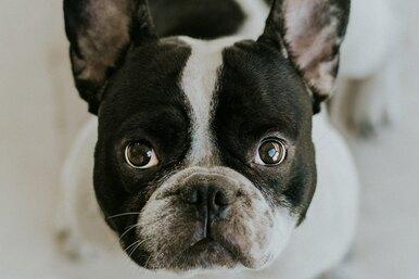 Оказалось, что собаки иногда могут понимать, врет ли им человек