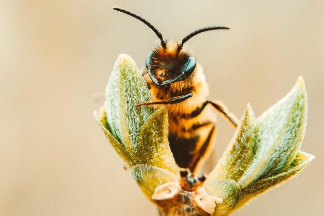 Власти Подмосковья рассказали опоявлении пьяных пчел врегионе