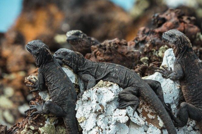 Леонардо Ди Каприо пожертвует $43 миллиона наспасение природы Галапагосских островов