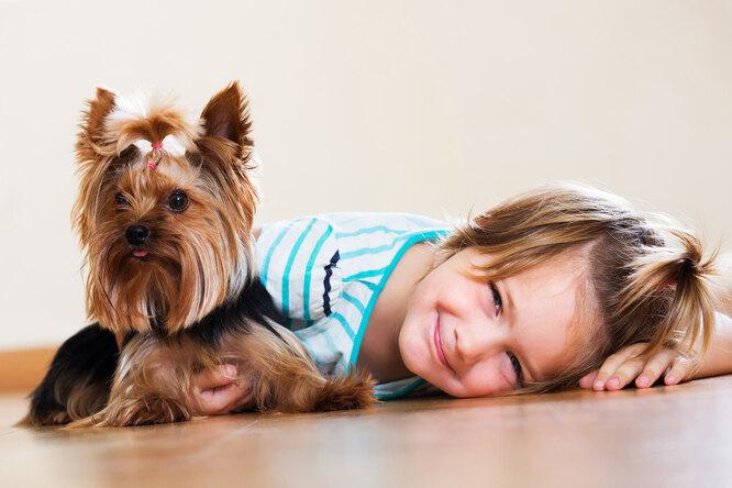6 пород собак длямаленькой квартиры: отлично ладят сдетьми ине вызывают аллергию
