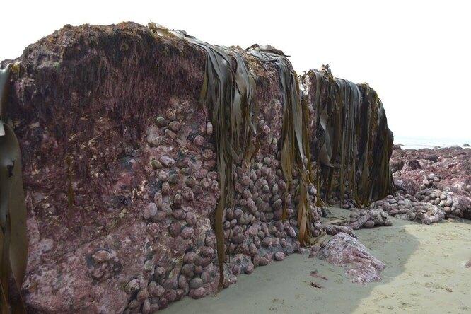 Землетрясение подняло наповерхность фрагмент морского дна