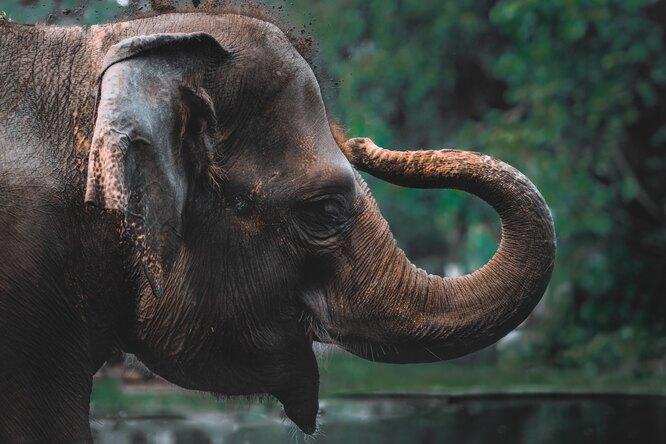 На что способен хобот слона: чудеса гибкости иделикатности