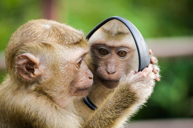 Насколько опасна длячеловека оспа обезьян? Отвечает эксперт