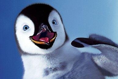 20 любопытных фактов опингвинах