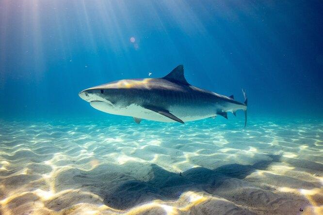 В Австралии отказались оттермина «нападение акул», чтобы побороть стереотипы охищниках