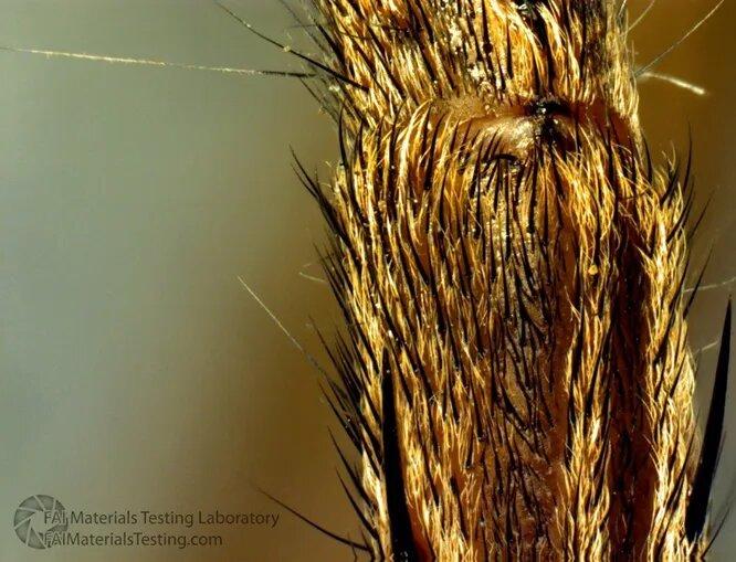 Пауки характеризуются неплохим зрением и полным отсутствием слуха. Зато с помощью чувствительных волосков на ногах они воспринимают вибрацию воздуха или паутины, с идеальной точностью определяя её источник. Запахи они различают другими волосками.