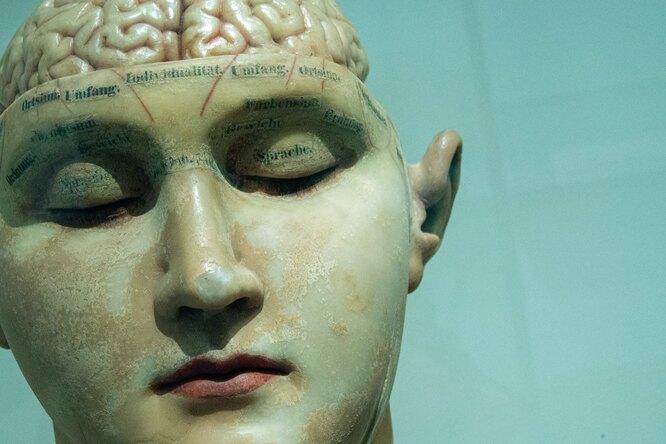 Нейробиологи впервые смогли отследить путь мыслей черезмозг