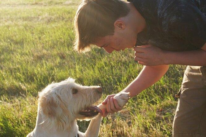 У собак обнаружили «человеческую» способность