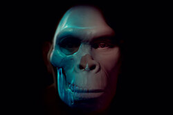 Параллели человечества: главные конкуренты Homo sapiens