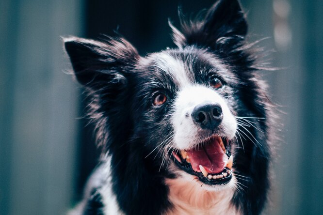Исследование: 65 видов животных могут смеяться как человек