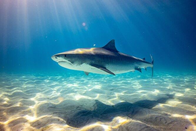 В океанариуме акула родила детеныша, зачатого безсамца