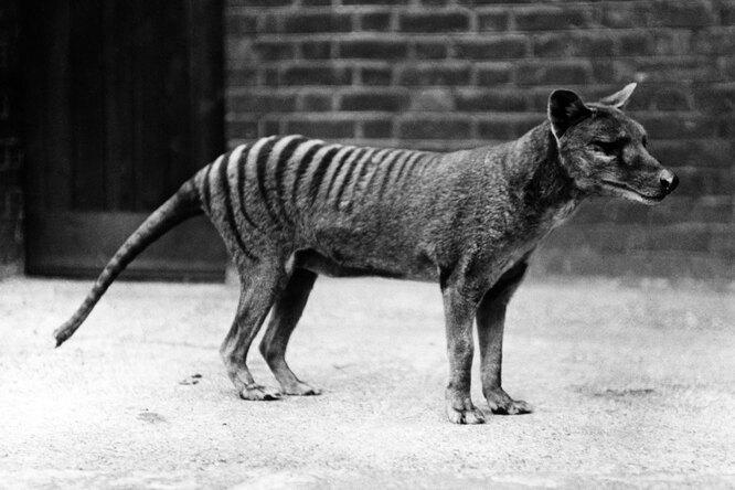 10 видов животных, исчезнувших слица Земли запоследние 150 лет понашей вине