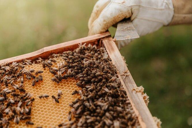 Rolls-Royce открыл вакансии пчеловодов насвою пасеку