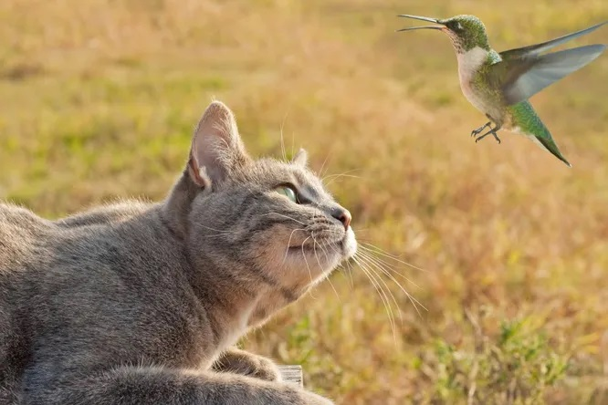 Почему кошки «стрекочут» привиде птиц?