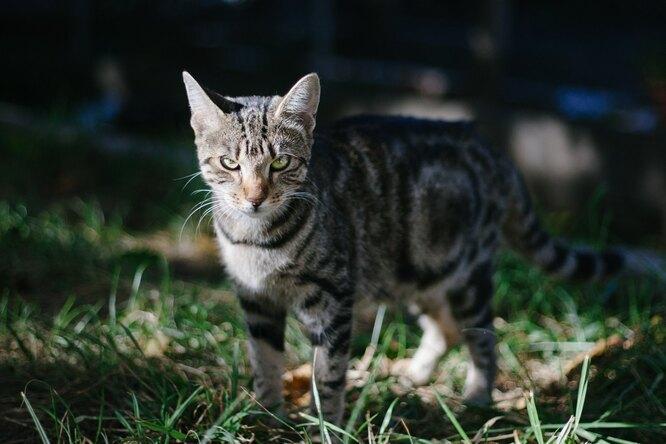 Кот вернулся кхозяевам, которые решили, что кремировали его