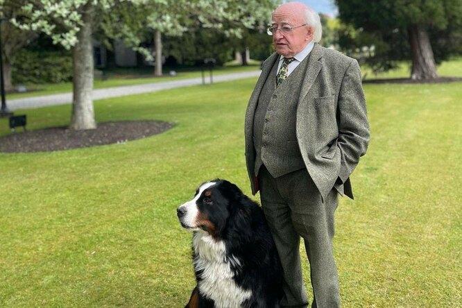 Официальному выступлению президента Ирландии помешал щенок. Он слишком хотел играть