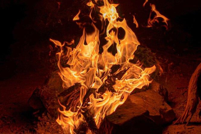 С 1 мая вПодмосковье запретят жарить шашлыки влесу