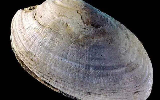<br />Как ни странно, но древнейшим образцом абстрактного искусства является вот эта раковина моллюска с острова Ява, Индонезия. Команда ученых из Лейденского университета в Голландии пришла к выводу, что раковине не меньше полумиллиона лет. Знаки на ее поверхности были вырезаны в форме зигзагообразных фигур, а резцом скорее всего послужили акульи зубы, обнаруженные в том же месте, что и главная находка.<br />&nbsp;