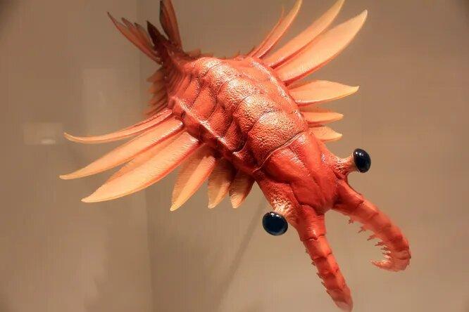 <br />Динокариды, они же &laquo;ужасные креветки&raquo;, бороздили моря кембрия 515 миллионов лет назад. Самым известным из них являлся аномалокарис, успешный хищник метровой длины с великолепным зрением и острейшими когтями. Вероятнее всего, он охотился на небольших трилобитов. Существовали и более мирные виды динокарид, питающиеся планктоном, например, двухметровый Aegirocassis benmoulae.<br />&nbsp;