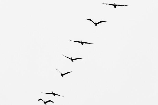 Как стрижи установили новый рекорд скорости полета среди птиц