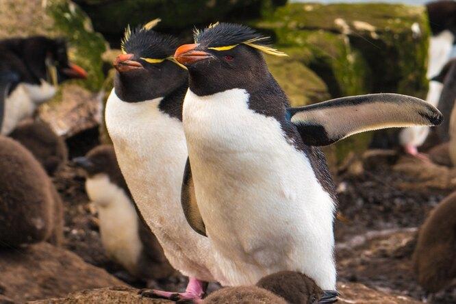 В американском зоопарке пингвину сартритом сшили ботиночки