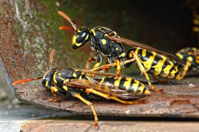Самые опасные насекомые вмире: скем изних лучше несталкиваться