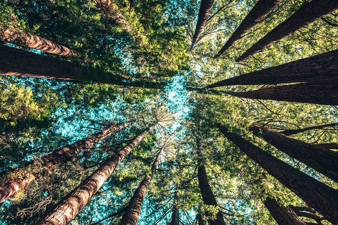 Россияне поучаствуют вчемпионате мира пообниманию деревьев
