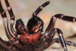10 самых ядовитых животных наЗемле