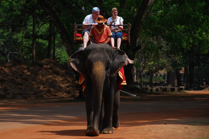 На Шри-Ланке запретили управлять слонами внетрезвом виде