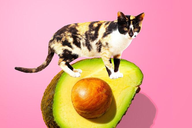 Чем полезно авокадо: 5 причин есть его каждый день