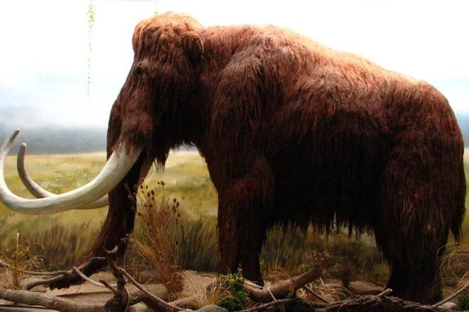 Как ученые нашли древнейшую ловушку длямамонтов