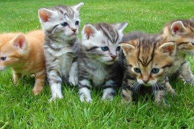 10 самых необычных разновидностей диких кошек