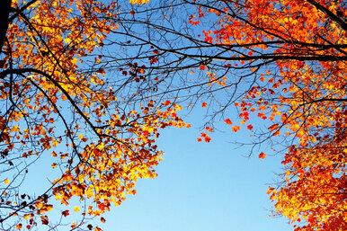 Почему нельзя сжигать опавшие осенние листья?
