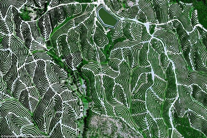 Фруктовые сады в Испании.