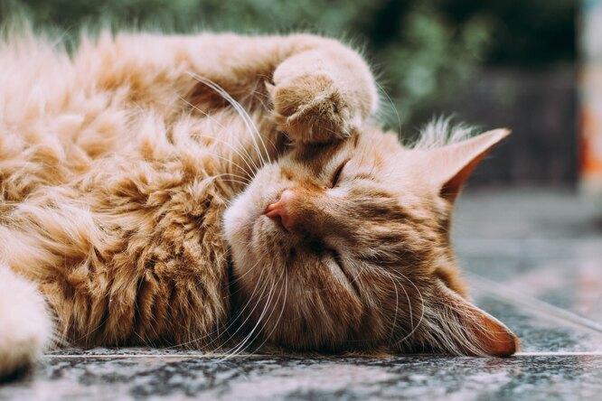 В Канаде появилось приложение, которое определяет состояние здоровья кошек