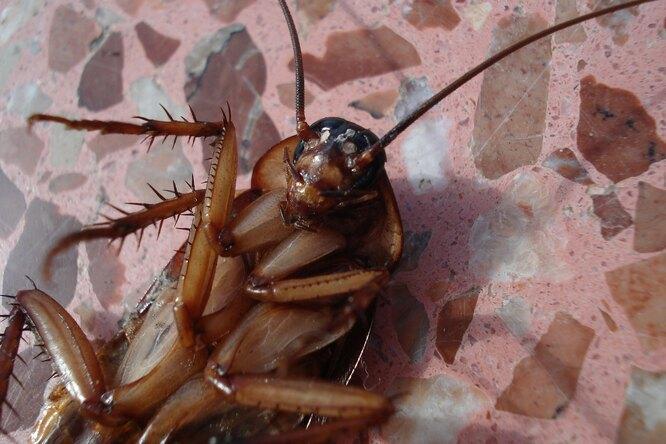 Тараканы: откуда они берутся вдоме икуда уходят