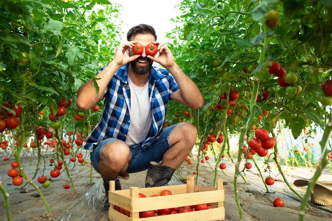 Чем полезны помидоры: их питательная ценность ипреимущества дляздоровья