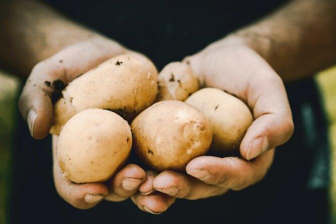 Как правильно выбирать картофель?