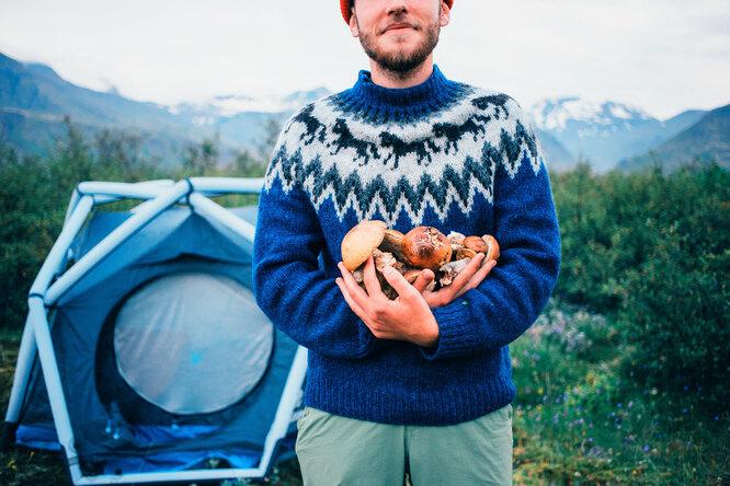Чем хороши грибы, когда их лучше собирать ичто делать сдобычей