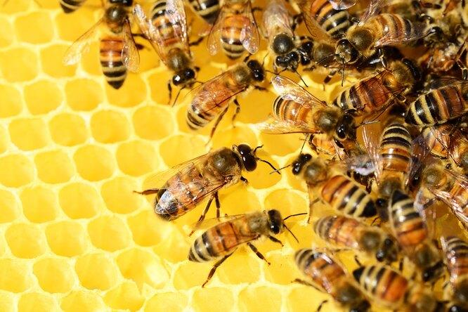 Ученые выяснили, почему пчелы нервничают